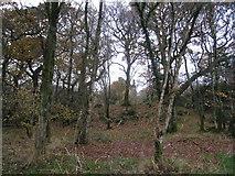 NY0265 : Caerlaverock Castle through the trees by Jonathan Thacker