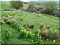 NS7380 : Spring flowers at Drumnessie by Robert Murray