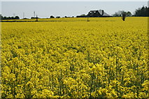 S8177 : Rapefields in County Carlow by Sarah777
