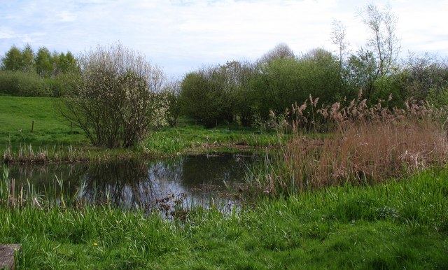 Wetland area, Clifton Ings