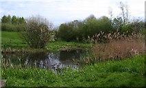 SE5853 : Wetland area, Clifton Ings by Gordon Hatton