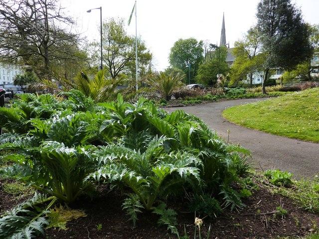 Cardoons or artichokes, Upton Park