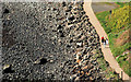 J4893 : The Blackhead Path, near the lighthouse, Whitehead by Albert Bridge