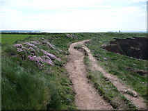 SM8003 : Thrift beside the Pembrokeshire Coast Path on St. Ann's Head by Jeremy Bolwell
