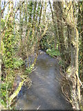 SX0366 : Small tributary of the Camel at Nanstallon by Rod Allday