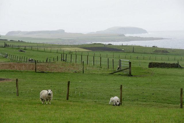 View to Sumburgh Head from Hestingott