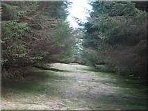 NY6176 : Firebreak in the plantation on Black Rigg (3) by Mike Quinn
