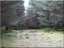 NY6176 : Blocked firebreak in the plantation on Black Rigg (4) by Mike Quinn