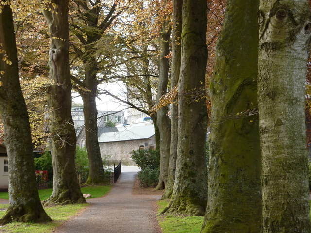 Beech tree avenue, Upton Park, Torquay