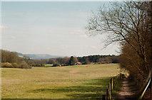 TQ1148 : Evening sun alongside Deerleap Wood by Patrick Vincent