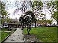 SJ9295 : St Lawrence's Lychgate by Gerald England