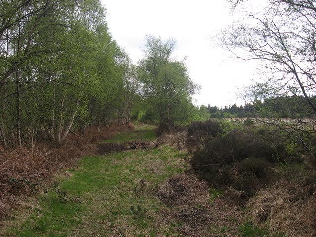 Track at Stormanstown Bog, Ardee
