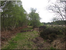 N9192 : Track at Stormanstown Bog, Ardee by Kieran Campbell