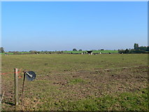 SJ4532 : Cattle grazing field with electric fence by Eirian Evans
