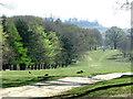 SU9623 : Halfmoon Furze, Petworth Park by nick macneill