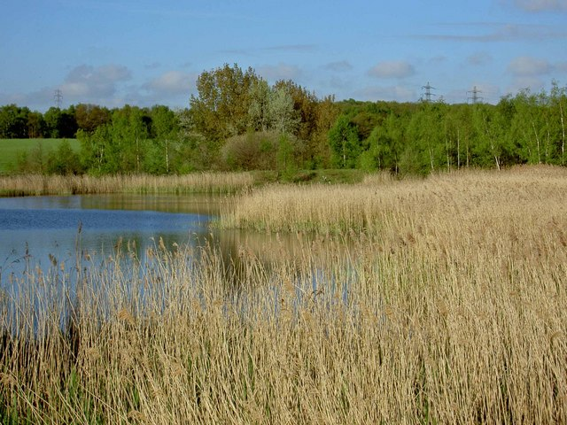 Reed beds near to the River Dearne and RSPB Edderthorpe Flash
