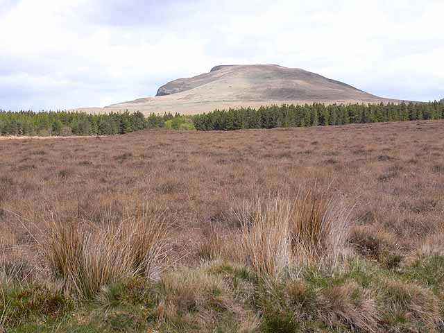 Moorland and forest at Laghtmurragha