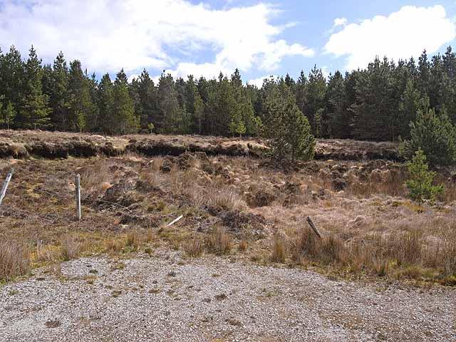 Forest at Laghtmurragha