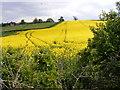 SO7891 : Rape Field View by Gordon Griffiths