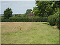 TQ8243 : Fox near Place Farm Cottages by Oast House Archive
