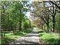 TF6724 : Lane through Fowler's Plantation by Richard Humphrey