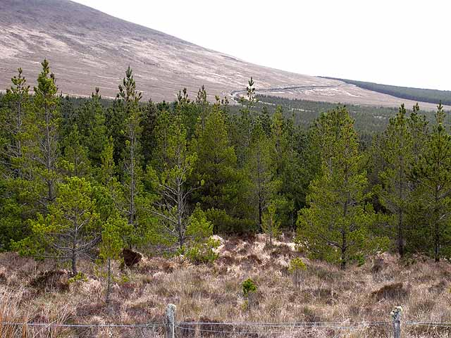 Forest below the slopes of Tawnaghmore