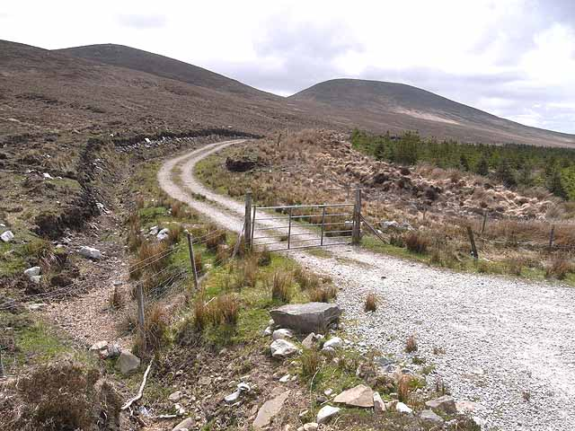 Forest road at Tawnaghmore