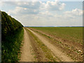 SE9860 : Farm Track and Fertile Field by Andy Beecroft