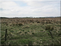 NZ0266 : Shildon Bog near Low Shildon by Les Hull