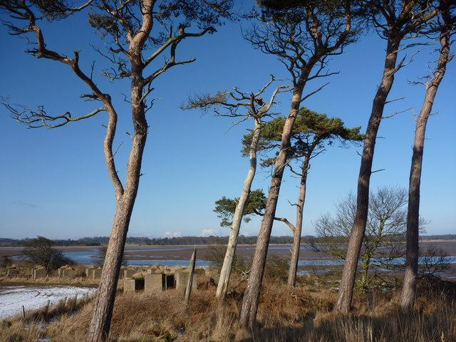 East Lothian Landscape : Blocks and Pines at Hedderwick, East Lothian