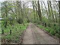 NZ0065 : Footpath in Copse near Aydon by Les Hull