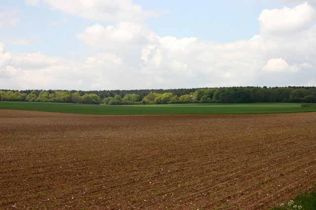 Cambridgeshire farmland