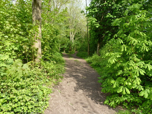 Footpath and bridleway in Lloyds' Coppice