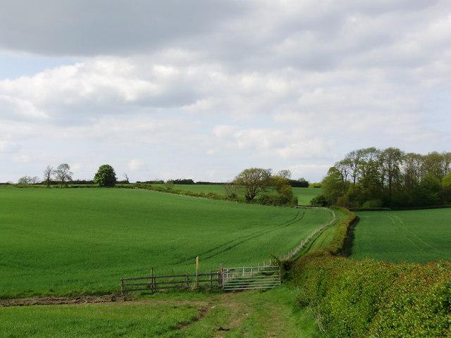 Heading to Allexton Wood