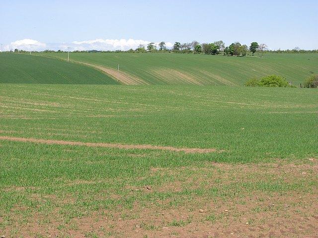 Spring barley, Nether Hailes