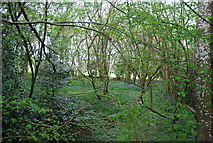 TQ1928 : Woodland by the path to Manning's Heath by N Chadwick