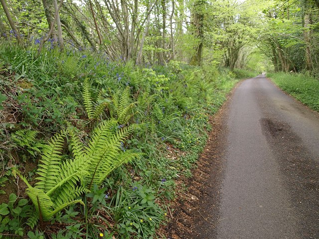 Ferns and bluebells by the lane near Royston Water