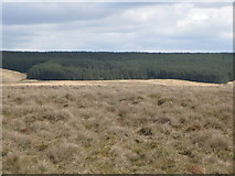NY5775 : Panorama from the cairn north of Borderrigg (16: E - Mongie's Knowe) by Mike Quinn
