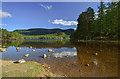 NH8908 : Loch an Eilein by Mike Searle