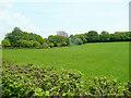 ST4895 : Pastoral scene at Itton Common by Jonathan Billinger
