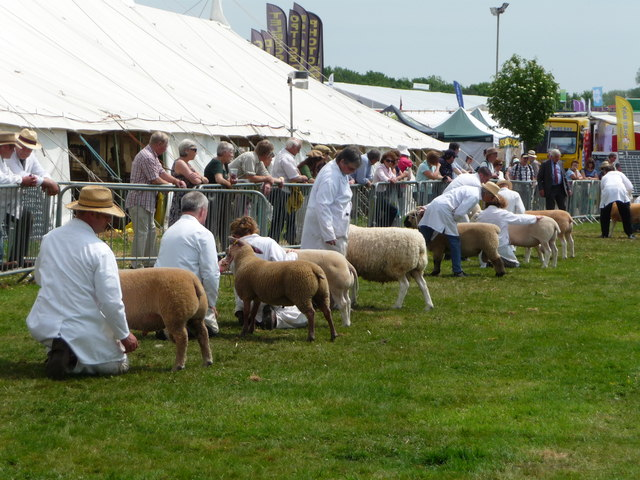 Westpoint : Devon County Show 2010 - Sheep Judging