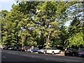 TQ3104 : Trees beside the level by Paul Gillett