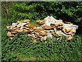 NT2470 : Dryad's Saddle in the Hermitage of Braid by M J Richardson