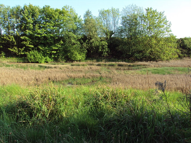 Wetlands by the railway line