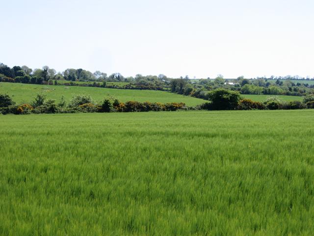 Barley field and landscape near Kilnamanagh Lower, Co. Wexford