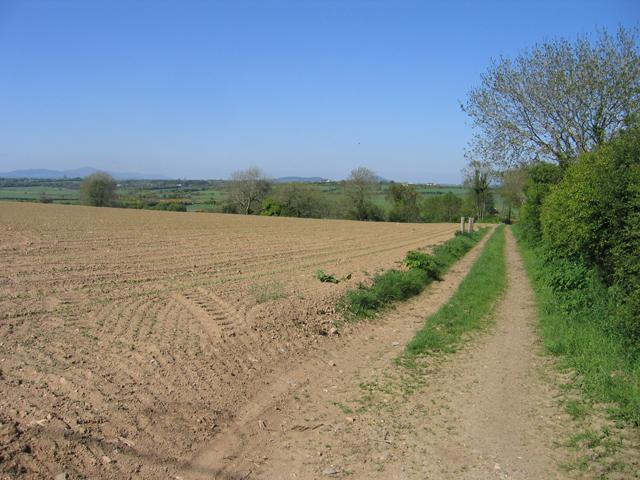 Arable farmland near Tullerstown, Co. Wexford
