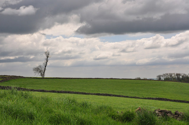 Isolated hillside tree - Parwich