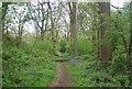 TQ0834 : Sussex Border Path, Little Hawks Hill Wood by N Chadwick