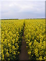 SO7798 : Oilseed Path by Gordon Griffiths