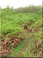 SR9795 : Footpath near Stackpole by Gareth James